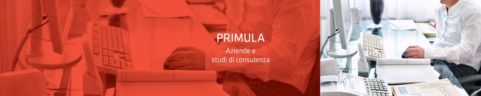 banner_primula
